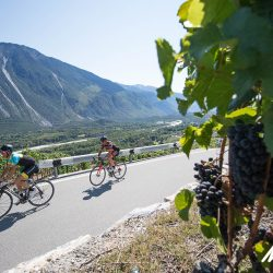 Cycling past grape vines in the Rhone valley on day 1 of the Raid Dolomites