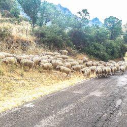 Wildlife on the roads on the Marmot Tours Raid Sardinia