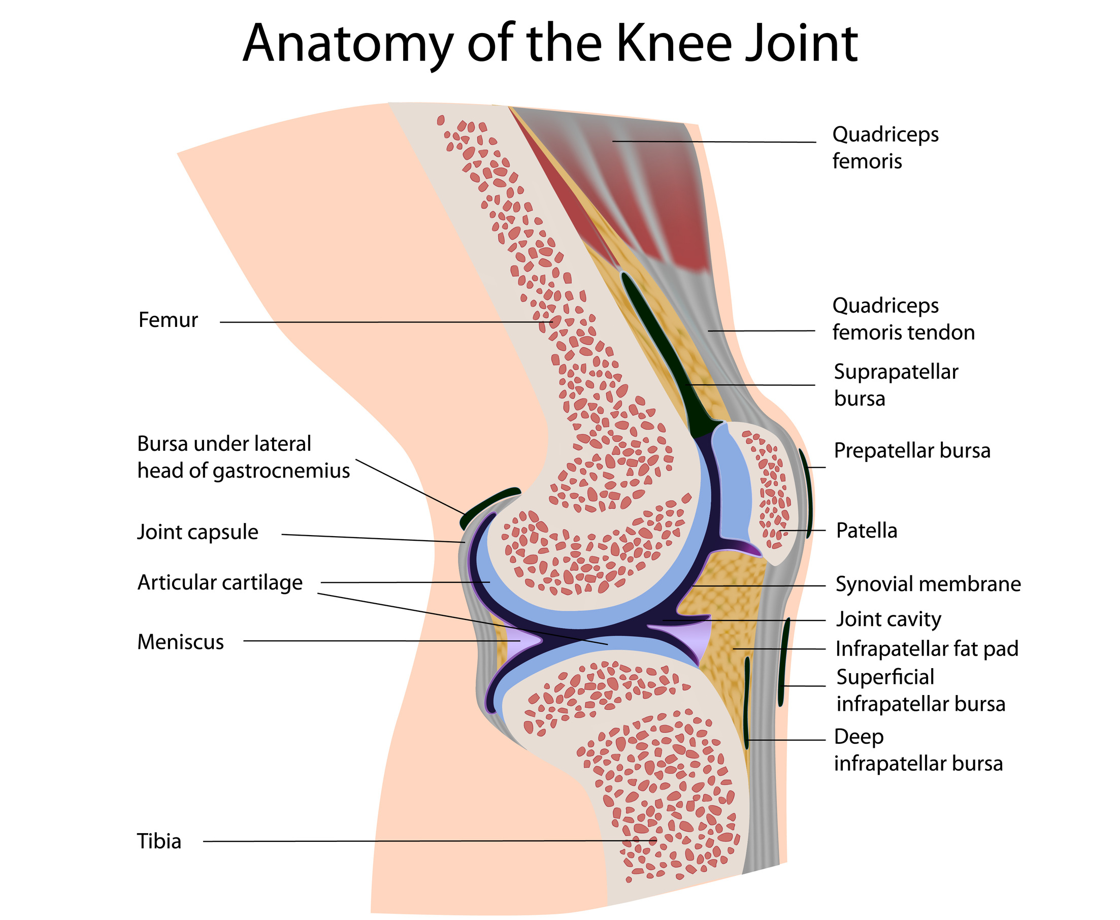 Knee Pain In Cyclists And How To Avoid It Marmot Tours