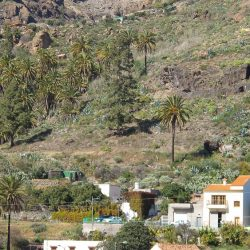 Rural villages in Gran Canaria with palm trees