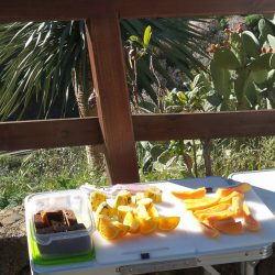 Fresh fruit on offer during Marmot Tours cycling holiday in Gran Canaria