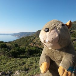 Marmot Tours' Mascot, Margo, posing for a selfie in Sardinia