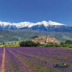 Lavender fields in Provence, France, near Ventoux