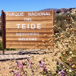 Parque Nacional Del Teide road sign - Marmot Tours Cycling challenge in Tenerife