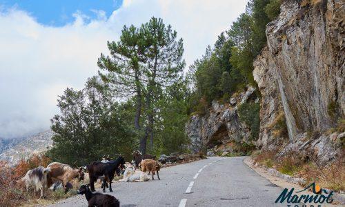 Classic Cols of Corsica - Day 2