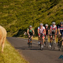 Riding the Raid Massif Central affords these Marmot Tours riders a taste of the 'real' rural France, where cattle roam free and occasionally get involved in the action! - rmc